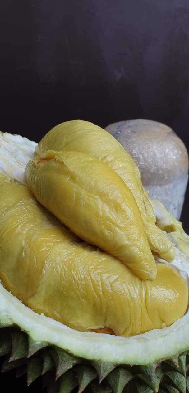 Hougang Durian | Durian Express Delivery